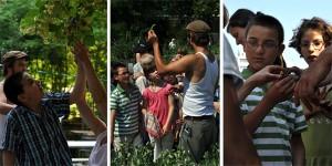 Projektwoche 2011: Besuch in den Prinzessinnengärten